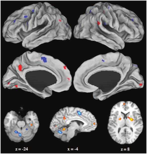 Spreng_fMRI.png